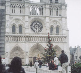 paris_tree