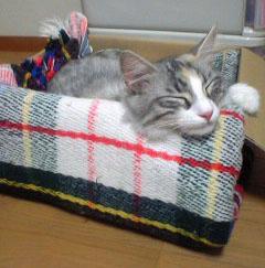 pia_sleeping.jpg